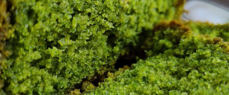 zielona babka piaskowa kamil paprotny dietetyk rybnik